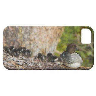 Canada, British Columbia,Common Goldeneye, iPhone SE/5/5s Case