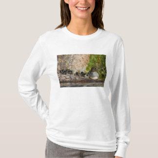 Canada, British Columbia,Common Goldeneye, T-Shirt