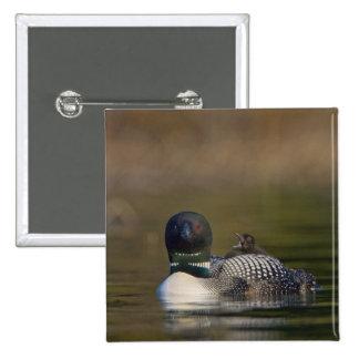 Canada, British Columbia,Common Loon, breeding 2 2 Inch Square Button