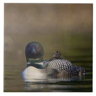 Canada, British Columbia,Common Loon, breeding 2 Ceramic Tile