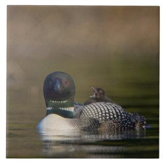 Canada, British Columbia,Common Loon, breeding 2 Large Square Tile