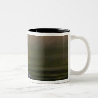 Canada, British Columbia,Common Loon, breeding 2 Two-Tone Coffee Mug