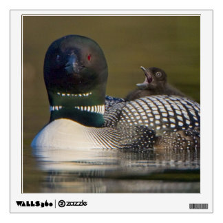 Canada, British Columbia,Common Loon, breeding 2 Wall Decal