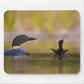 Canada, British Columbia,Common Loon, breeding 3 Mouse Pad