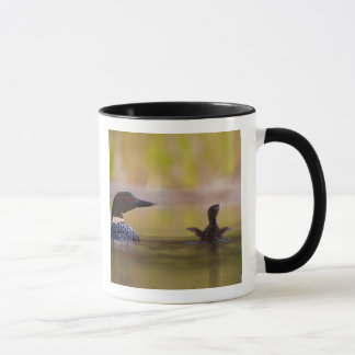 Canada, British Columbia,Common Loon, breeding 3 Mug