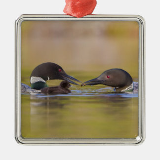 Canada, British Columbia,Common Loon, breeding Metal Ornament