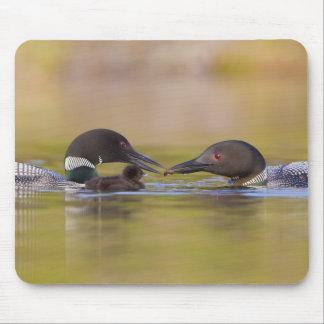 Canada, British Columbia,Common Loon, breeding Mouse Pad