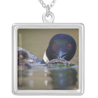 Canada, British Columbia,Common Loon, breeding Silver Plated Necklace