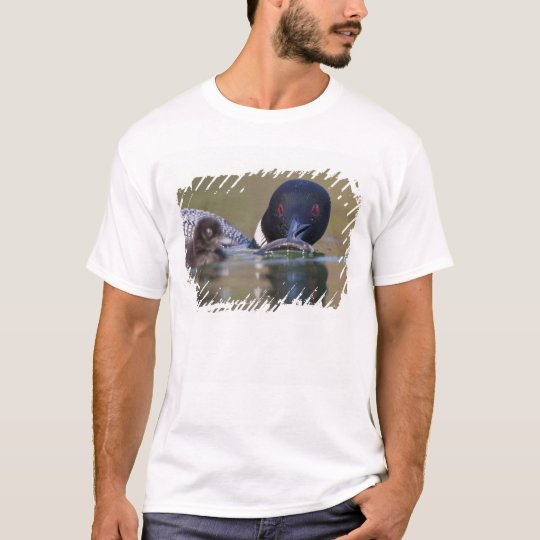 Canada, British Columbia,Common Loon, breeding T-Shirt