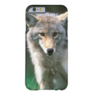 Canada, British Columbia, Coyote (Canis latrans) Barely There iPhone 6 Case