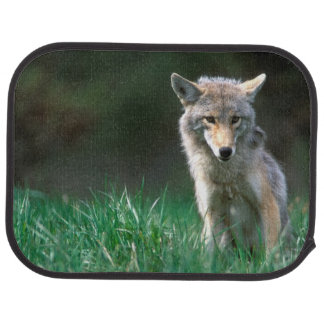 Canada, British Columbia, Coyote (Canis latrans) Car Floor Mat