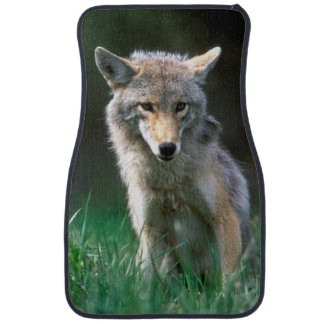 Canada, British Columbia, Coyote (Canis latrans) Car Mat
