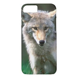 Canada, British Columbia, Coyote (Canis latrans) iPhone 7 Case