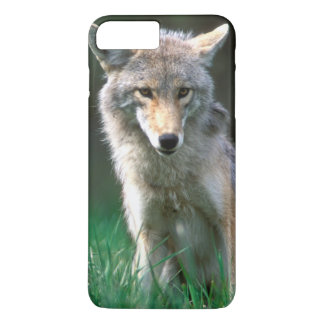 Canada, British Columbia, Coyote (Canis latrans) iPhone 7 Plus Case