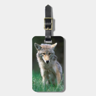 Canada, British Columbia, Coyote (Canis latrans) Luggage Tag
