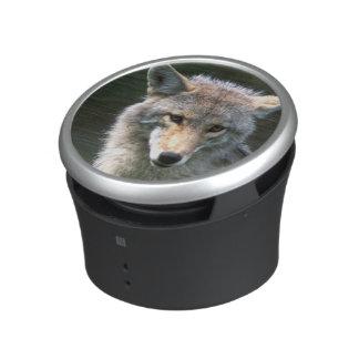 Canada, British Columbia, Coyote (Canis latrans) Speaker