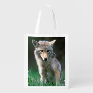 Canada, British Columbia, Coyote (Canis latrans) Reusable Grocery Bag