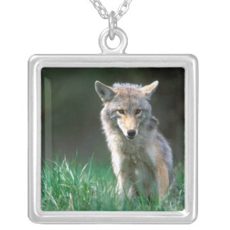 Canada, British Columbia, Coyote (Canis latrans) Silver Plated Necklace