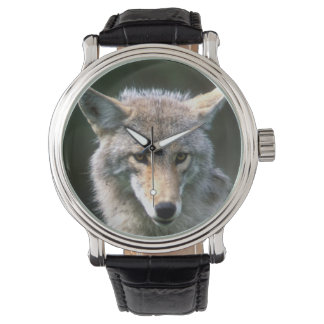 Canada, British Columbia, Coyote (Canis latrans) Wrist Watch