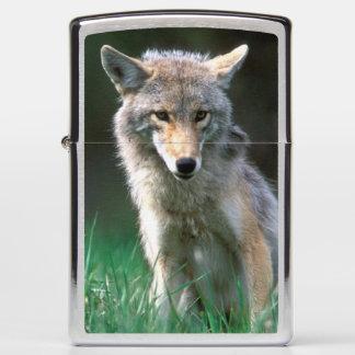 Canada, British Columbia, Coyote (Canis latrans) Zippo Lighter
