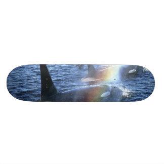 Canada, British Columbia, Johnstone Straight, Custom Skate Board