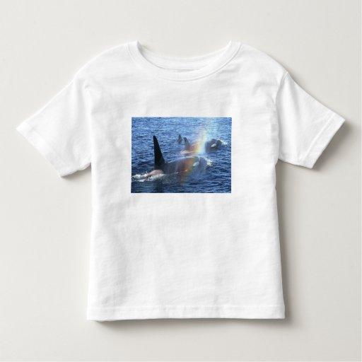 Canada, British Columbia, Johnstone Straight, Toddler T-shirt