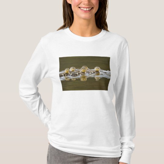 Canada, British Columbia, Kamloops, mallard 2 T-Shirt