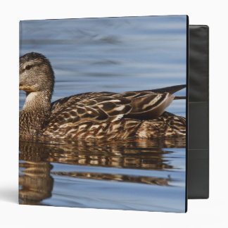 Canada, British Columbia, Kamloops, mallard Binder