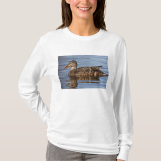 Canada, British Columbia, Kamloops, mallard T-Shirt