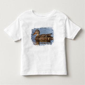 Canada, British Columbia, Kamloops, mallard Toddler T-shirt