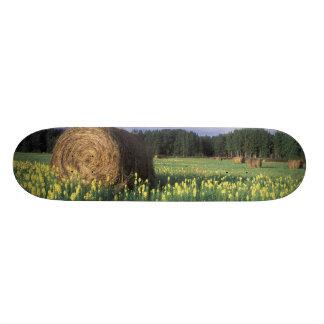 Canada, British Columbia, Kitwanga. Yellow Skateboard Deck