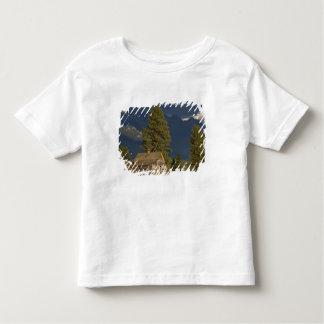 Canada, British Columbia, Kootenay Rockies, Toddler T-shirt