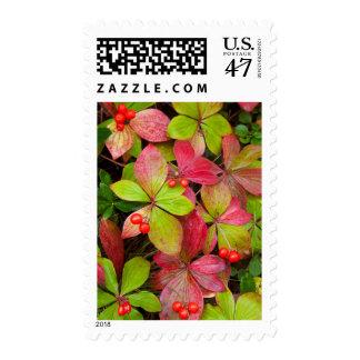 Canada, British Columbia, Mount Robson Postage Stamp