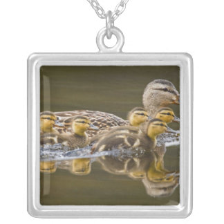 Canada, British Columbia near Kamloops, Silver Plated Necklace