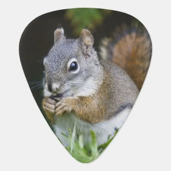 Canada  British Columbia  Red Squirrel Pine Guitar Pick by DanitaDelimont at Zazzle