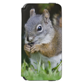 Canada, British Columbia, Red Squirrel Pine iPhone 6/6s Wallet Case