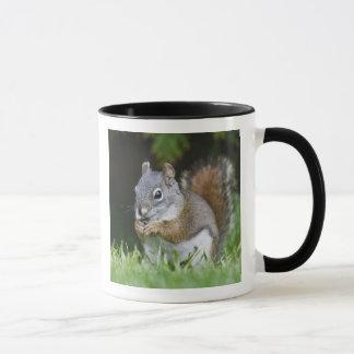 Canada, British Columbia, Red Squirrel Pine Mug