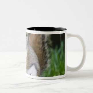 Canada, British Columbia, Red Squirrel Pine Two-Tone Coffee Mug