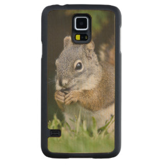 Canada, British Columbia, Red Squirrel Pine Carved® Maple Galaxy S5 Case