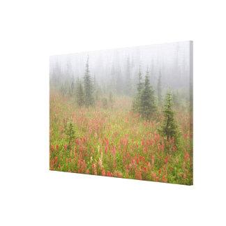 Canada, British Columbia, Revelstoke National Canvas Print