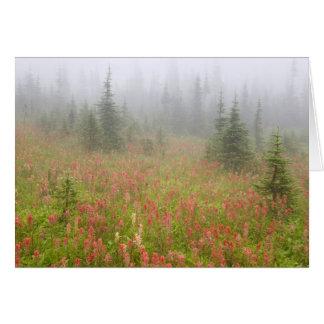 Canada, British Columbia, Revelstoke National Card