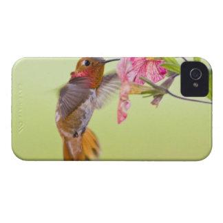 Canada, British Columbia, Rufous Hummingbird iPhone 4 Case