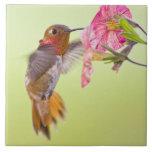 Canada, British Columbia, Rufous Hummingbird Large Square Tile