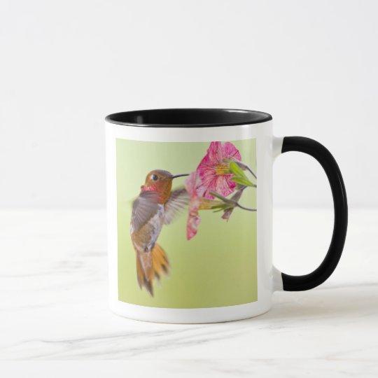 Canada, British Columbia, Rufous Hummingbird Mug