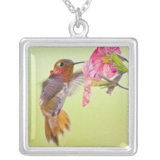 Canada, British Columbia, Rufous Hummingbird Silver Plated Necklace