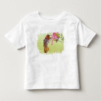 Canada, British Columbia, Rufous Hummingbird Toddler T-shirt