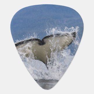 Canada, British Columbia, Vancouver Island, Guitar Pick