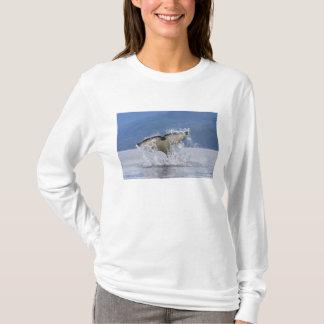 Canada, British Columbia, Vancouver Island, T-Shirt