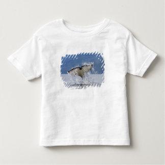Canada, British Columbia, Vancouver Island, Toddler T-shirt