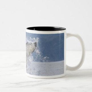 Canada, British Columbia, Vancouver Island, Two-Tone Coffee Mug